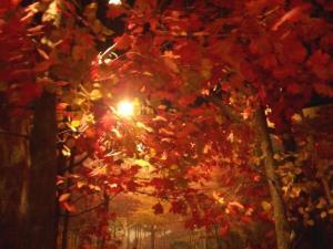 autumn-kiss-falling-leaves